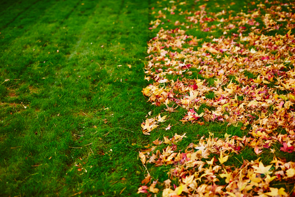 Fall Lawn Care Tips for a Thick Healthy Lawn this Spring